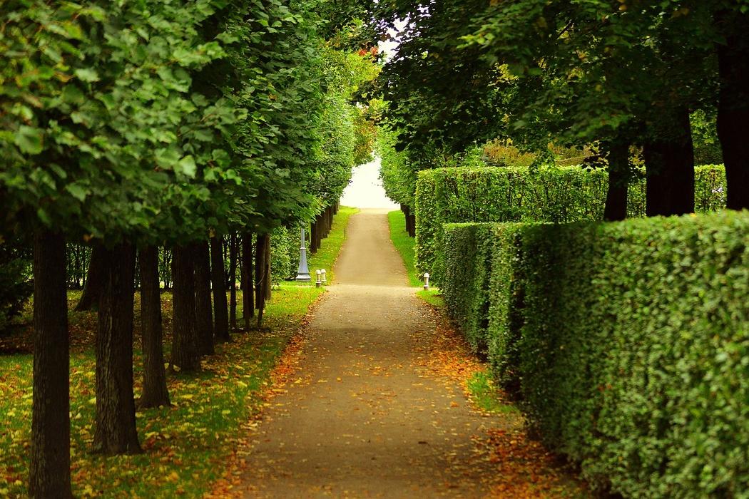 В Петербурге разрешат посещать парки,…
